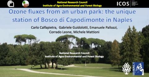 Capodimonte-Ozone fluxes IBAF